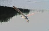 鳥集:IMGP6919-11.jpg