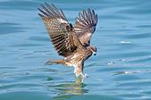 鳥集:IMGP7167-11.jpg
