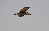 鳥:IMGP8438-11.jpg