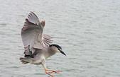 鳥集:IMGP6652-11.jpg