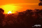 紅景天:IMGP8384-11.jpg