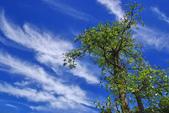 藍天白雲伴我行:IMGP1011-11.jpg