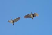 鳥:IMGP2943-11.jpg
