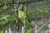 鳥:IMGP3200-11.jpg