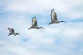 鳥集:IMGP3372-1.jpg