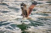 鳥集:IMGP6800-1.jpg