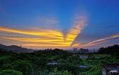 紅景天:IMGP9429-11.jpg