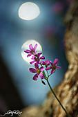 小花草也有春天:IMGP7517-11.jpg
