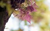 紅葉樹:IMGP9726-1.jpg