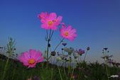 菊:IMGP3816-11.jpg