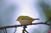 櫻、鳥:IMGP4217-11.jpg