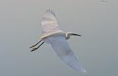 鳥集:IMGP6891-11.jpg