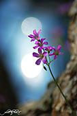 小花草也有春天:IMGP7524-11.jpg