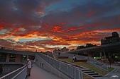 紅景天:IMGP7250-1.jpg