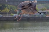 鳥集:IMGP6933-11.jpg