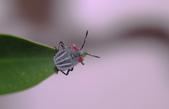 昆蟲:IMGP6799-11.jpg