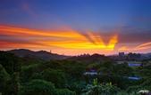 紅景天:IMGP9437-11.jpg