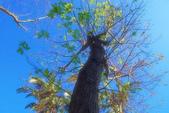 紅葉樹:IMGP3324-11.jpg