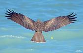 鳥集:IMGP1289-11.jpg