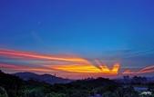 紅景天:IMGP9440-11.jpg