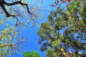 紅葉樹:IMGP3325-11.jpg
