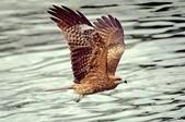 鳥集:IMGP7568-1-1.jpg
