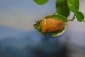 生態攝影:IMGP6156-11.jpg