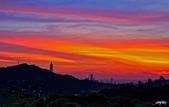 紅景天:IMGP9455-11.jpg
