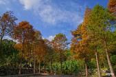 紅葉樹:IMGP0594-11.jpg