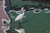鳥集:IMGP8107-11.jpg