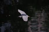 鳥:IMGP7196-11.jpg