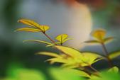 紅葉樹:IMGP8522-11.jpg