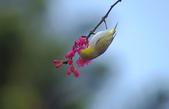 櫻、鳥:IMGP4161-1.jpg