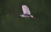 鳥:IMGP7102-11.jpg