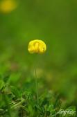 小花草也有春天:IMGP9806-11.jpg