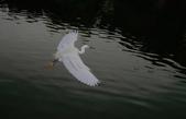 鳥:IMGP6579-1.jpg