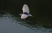 鳥:IMGP7114-11.jpg