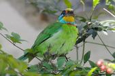 鳥:IMGP3224-1.jpg