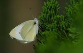 生態攝影:IMGP2821-11.jpg