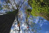 紅葉樹:IMGP8380-11.jpg