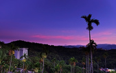 紅景天:IMGP2588-11.jpg