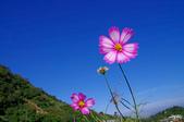 菊:IMGP5752-11.jpg