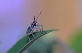 昆蟲:IMGP6795-11.jpg