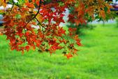 紅葉樹:IMGP5968-11.jpg