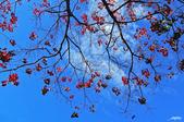 紅葉樹:IMG_1314-11.jpg