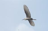鳥:IMGP7138-11.jpg