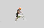 昆蟲:IMGP7789-11.jpg