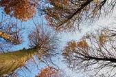 大湖公園:IMGP8484-1.jpg