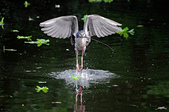 鳥:IMGP3616-1.jpg
