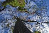 紅葉樹:IMGP8381-11.jpg